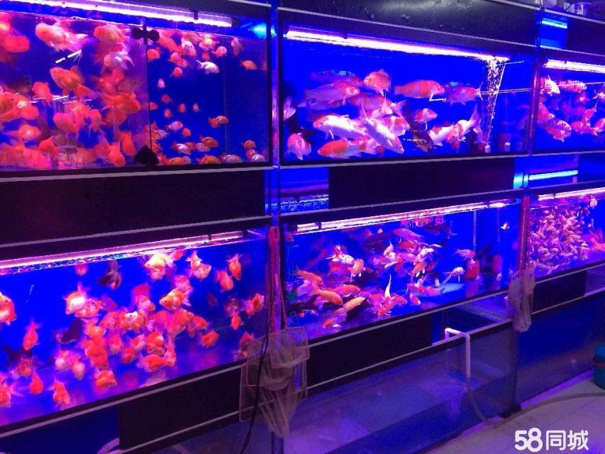(出租) 出租大东-津桥13平米摊位柜台3000元/月