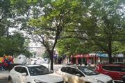花园路红旗路粮食局家属院一层临街商铺转让