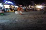 巴南鱼洞临街繁华地段餐饮旺铺转让