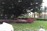 海珠区 金碧花园一期 森林广场