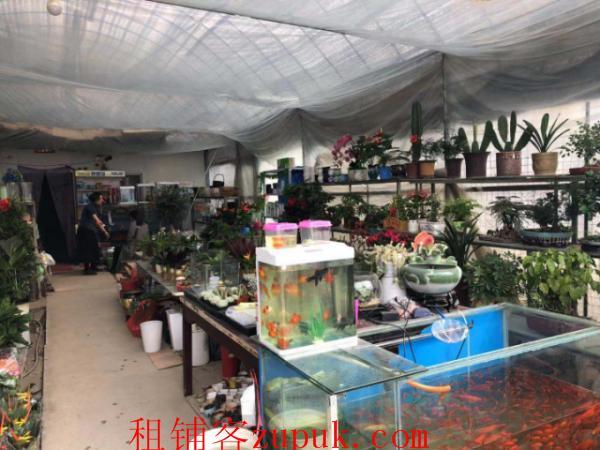 白沙洲烽胜路毛坦花木交易市场鲜花鱼店转让