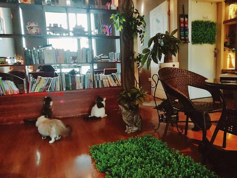 亨特国际四年猫咖老店低价急转