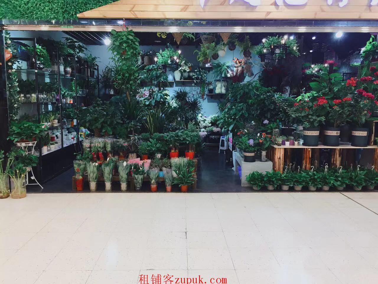渝北鲜花店水族植物转让