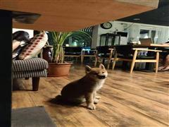 东四环内loft带院子咖啡酒吧